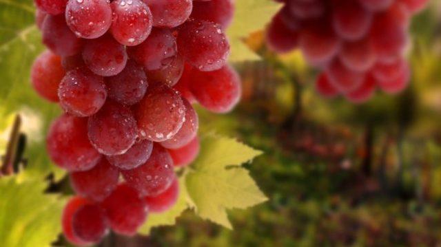 Можно зеленфй виноград при диабете