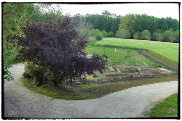 Le jardin se structure...