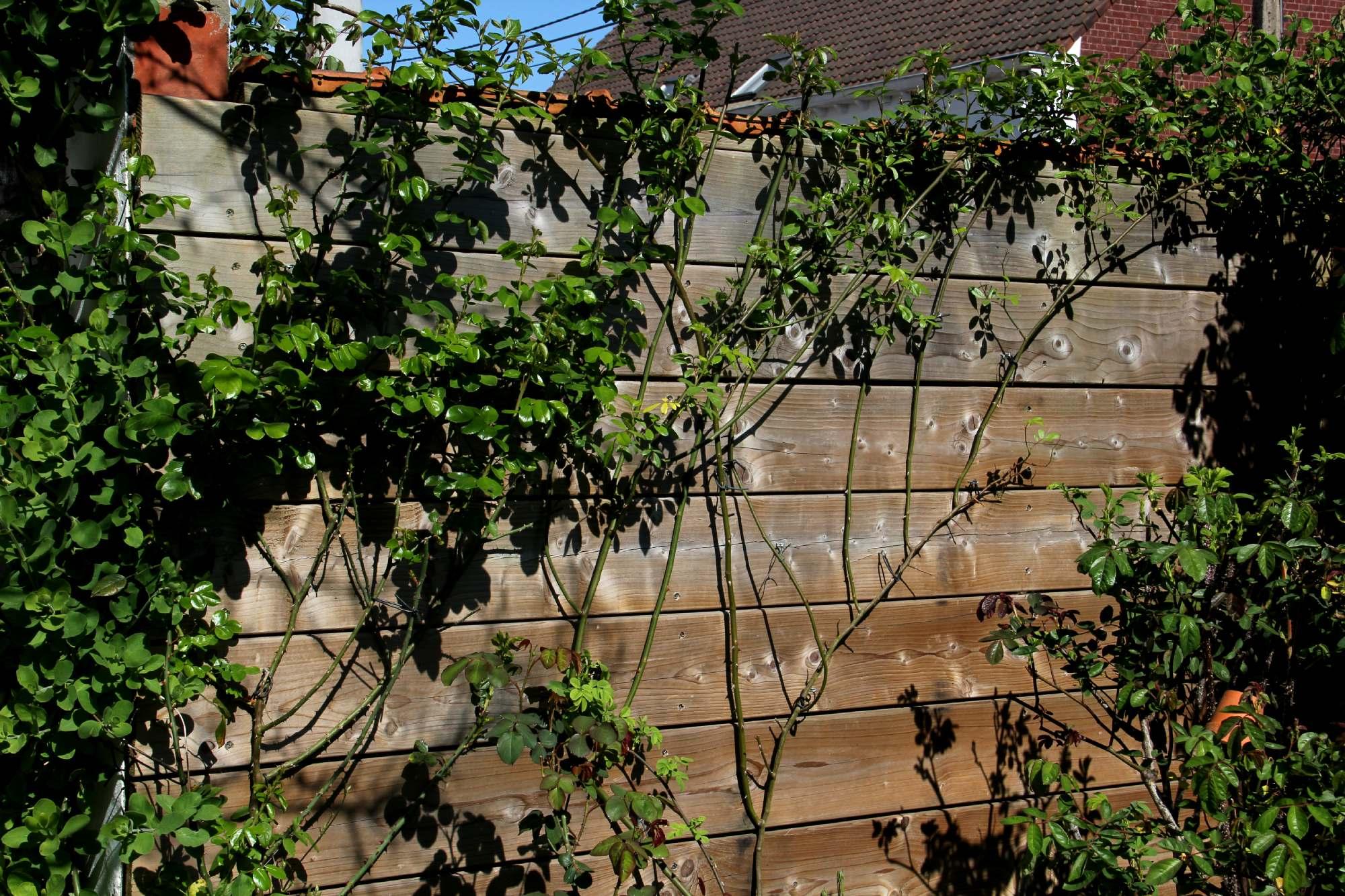 Fabriquer Treillis Bois Pour Plantes Grimpantes dites-moi - a little bit of paradise