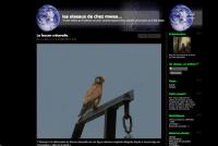 Les oiseaux de chez mwa
