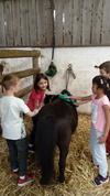 Equitation à l'Ecurie de Kerbotin en juin