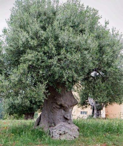 Les arbres habités