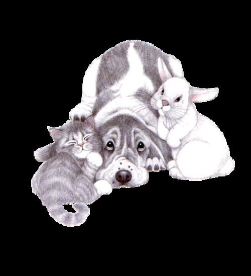 Chats et Chiens