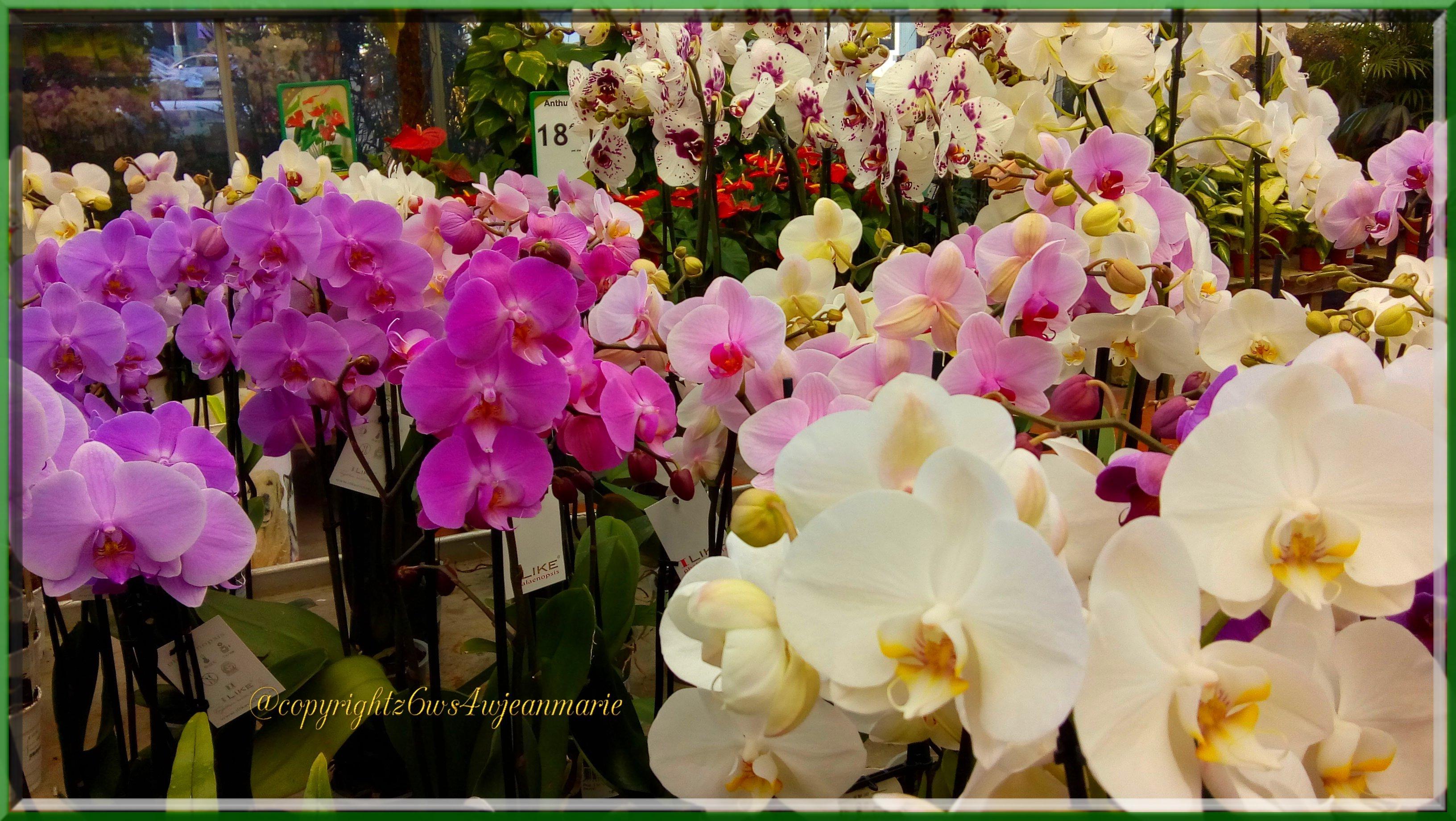 Comment S Occuper D Un Orchidée comment soigner vos orchidées et avoir des orchidées pendant