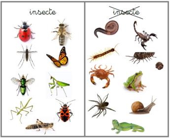 Insecte ou pas insecte