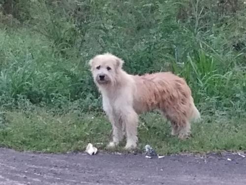 Ce chien a attendu sa famille pendant 4 ans