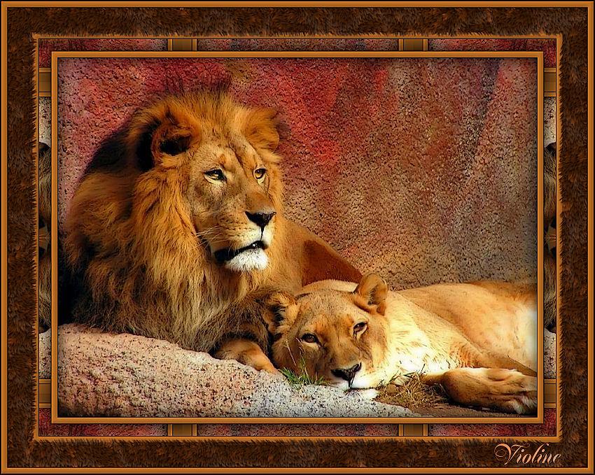 MES CREATIONS à mettre sur Monde Graphisme Creachou190319_Animal_fur