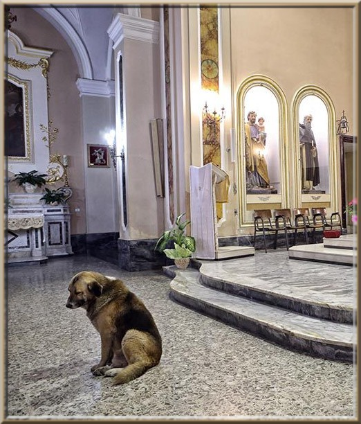 Image result for the dog attends church