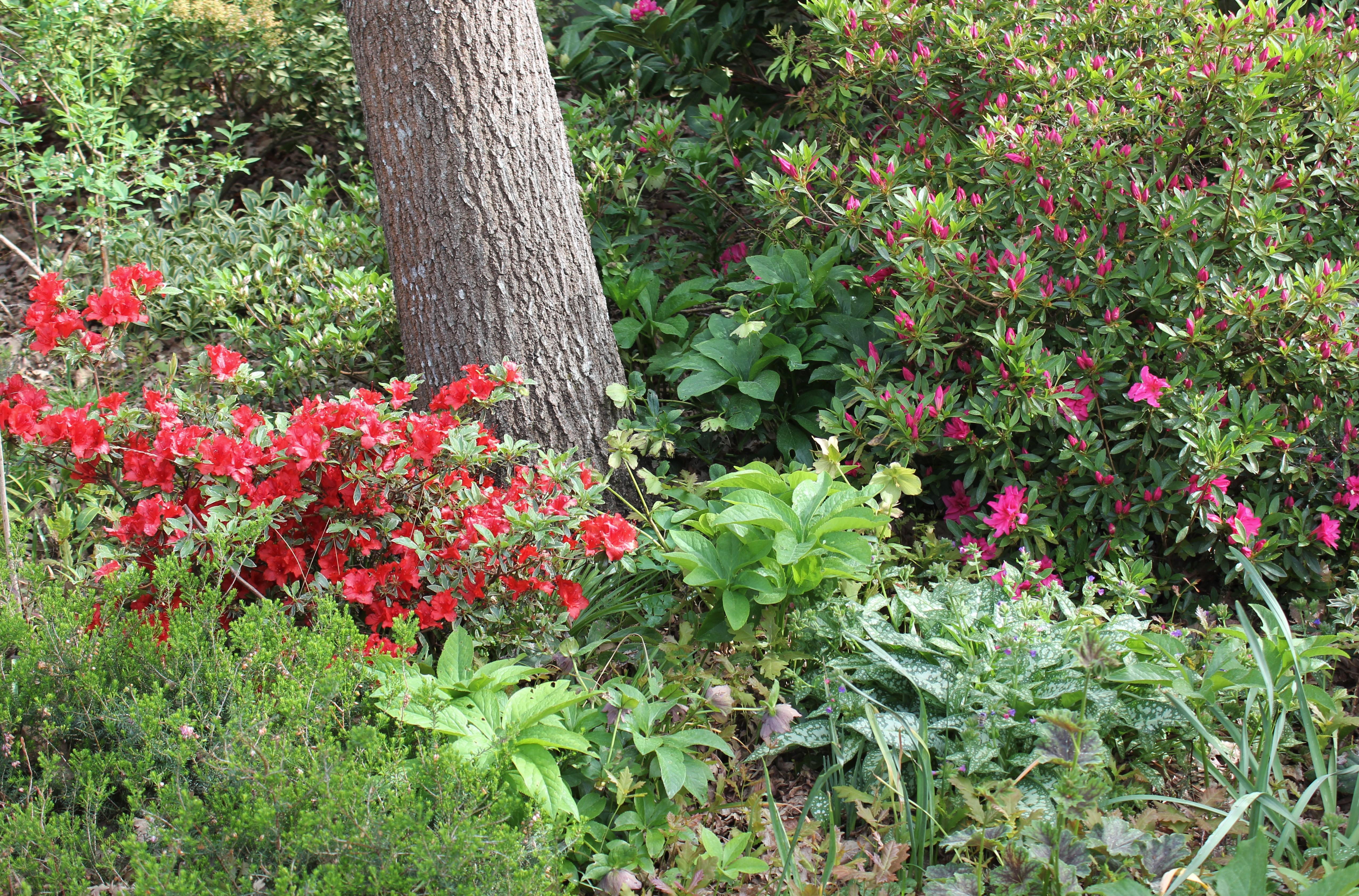 Fleur De Sous Bois Bleue printemps dans le sous-bois 2/2 - sable émouvant