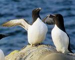 Pingouin / Manchot : les documentaires