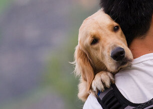 chien et homme