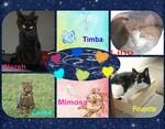 Poupette, Norah, Lino,Timba, Mimosa, Cookie