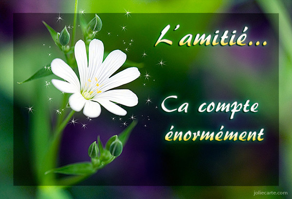 citations, amour, amitié - Frawsy