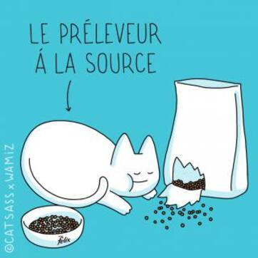 http://lancien.cowblog.fr/images/Chats3/52.jpg