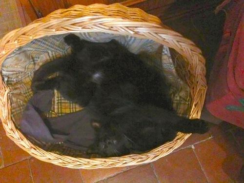 La sieste des chats / Cats ' rest