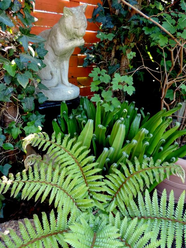 Plantes pour jardin d'ombre...