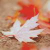 Icônes (LS): Autumn #2