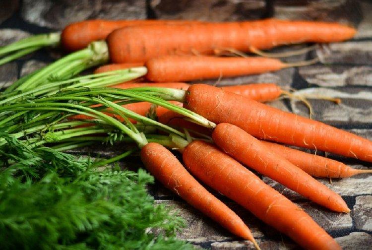 Геморрой лечение ботвой моркови
