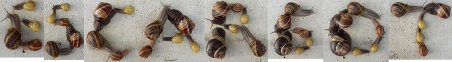 ESCARGOT en escargots