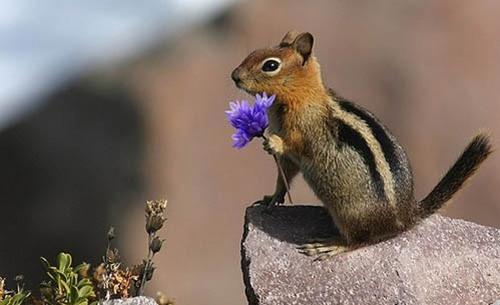 D'autres animaux-tendresse avec des fleurs - Animaux-Nature