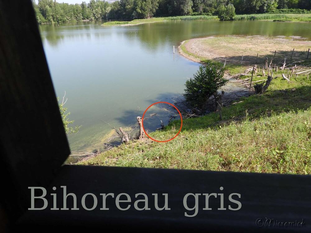 Le Bilhoreau gris