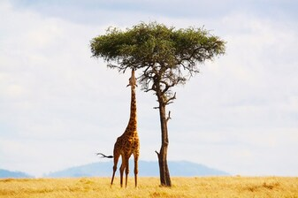 DISCOVER AN AFRICAN COUNTRY / KENYA