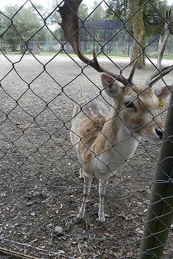 la zoo de Labenne