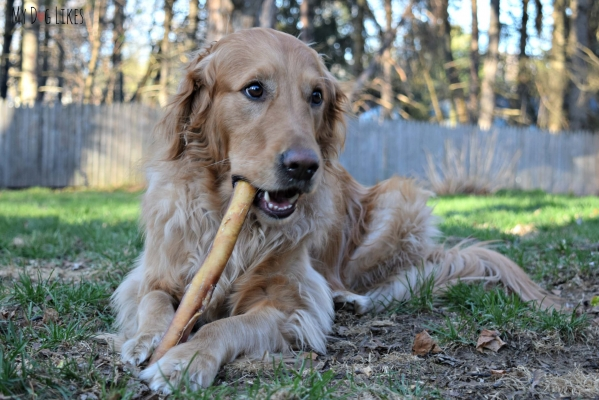 If You Have A Pet Then Know The Importance Of Keeping Them Amused Chew Toys Are Some Most Common Items To Keep Pets Like Dogs