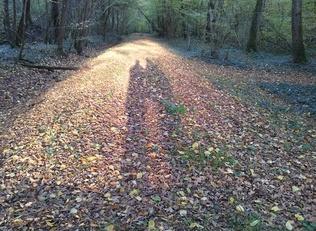 Belle semaine d'automne ! Nice autumn week !