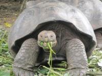 Nos amies les tortues