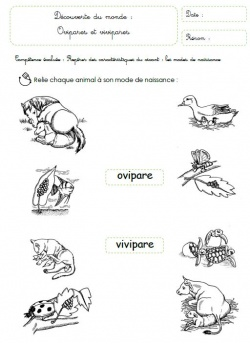Reproduction, naissance, cycle de vie