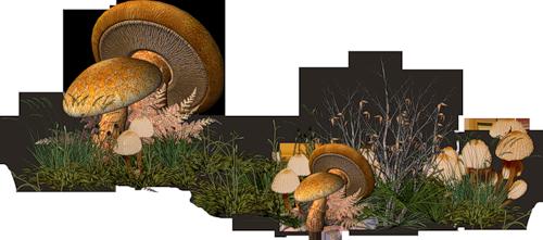 """Résultat de recherche d'images pour """"tube  de champignons"""""""