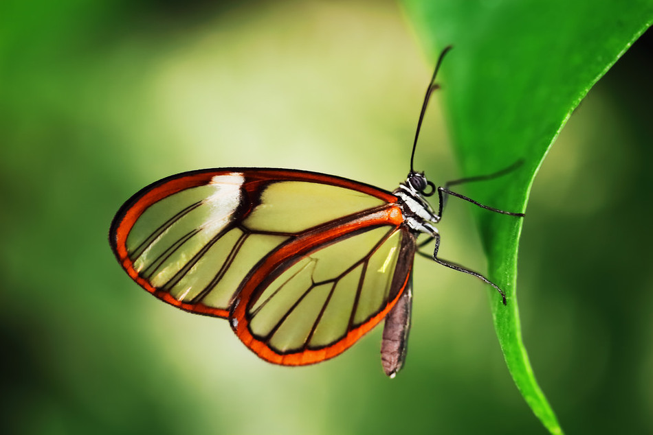 un papillon Martin le 06 Novembre trouvé par Martine IpyIQ6EQefNslvtNdrjazj0xoYo@950x634