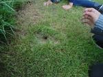 élevage de grillons