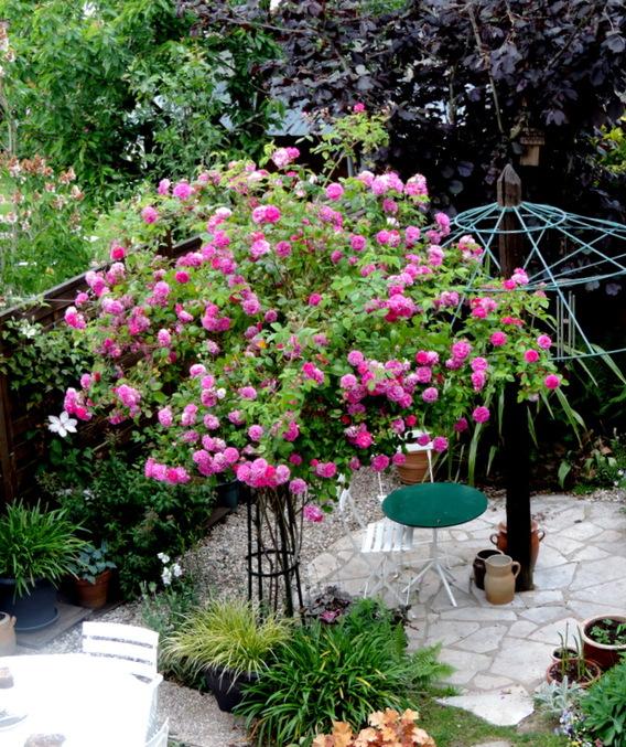 Le jardin en Mai...
