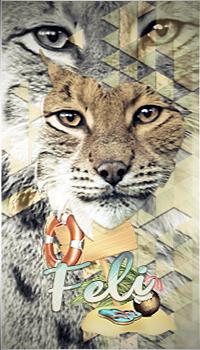 avatar spécial féli lynx 2020