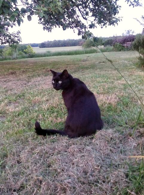 Les chats en vacances/ Cats in holidays