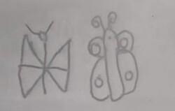 Dessins dirigés du papillon