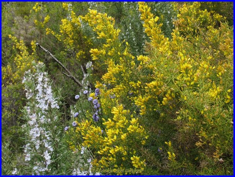 Les fleurs des collines