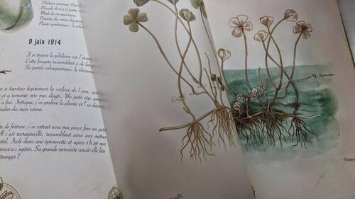 L'Herbier des fées