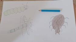 dessin dirigé de quelques insectes