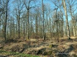 la forêt des étangs de Gruendel