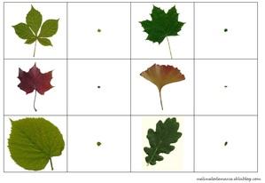 jeu de la loupe feuilles et fruits arbres