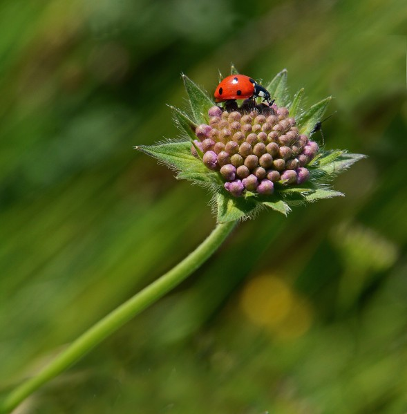 Insectes-papillons-5-5269@250x140.jpg