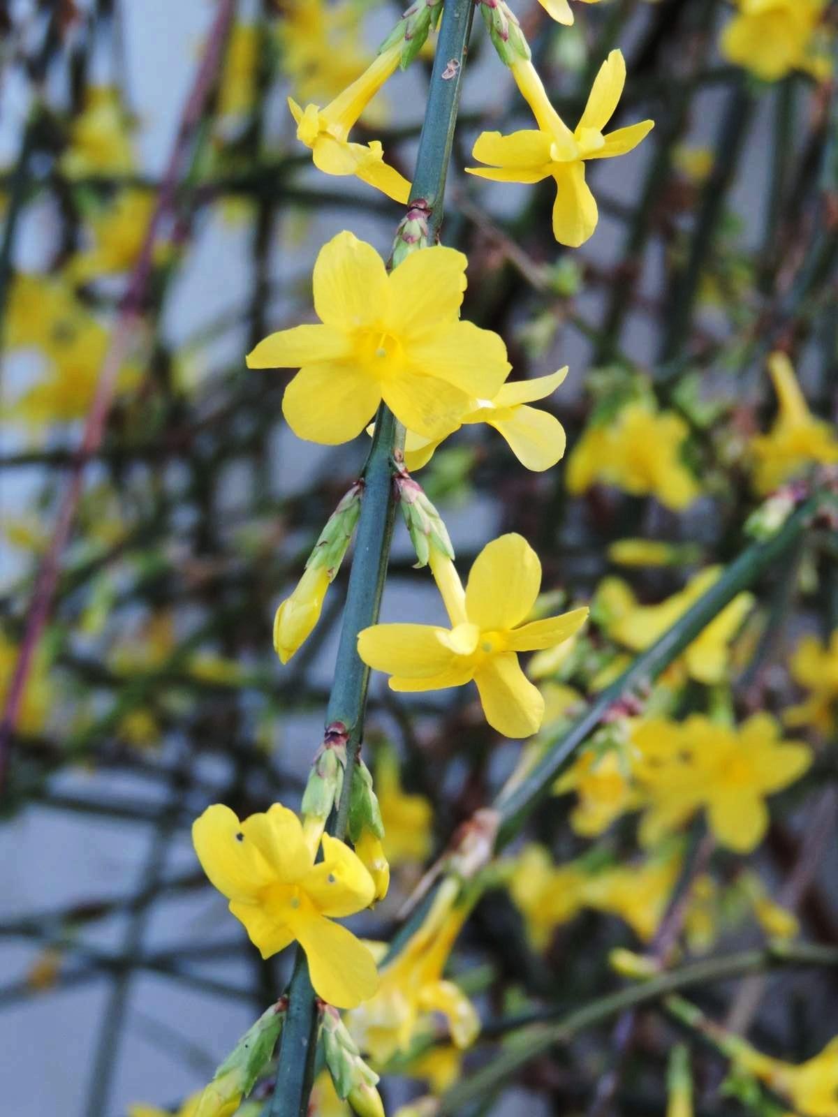 Floraisons de Janvier