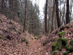 la forêt du Mont Sainte Odile
