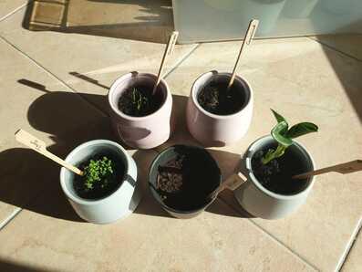 Evolution des plantons